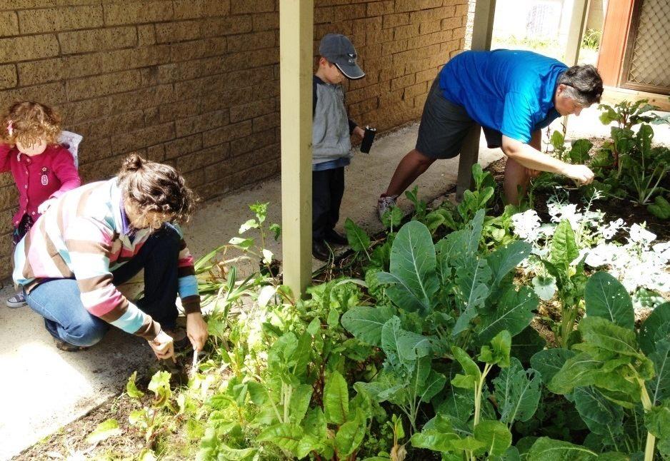 community-garden-at-dereel-community-centre
