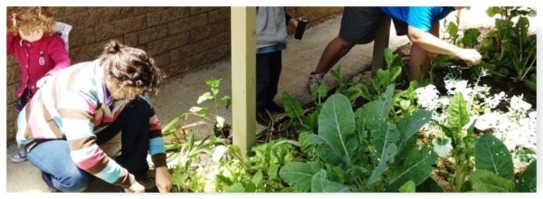 Dereel-Community-Garden