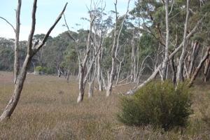 community-panning-dereel-swamp-project