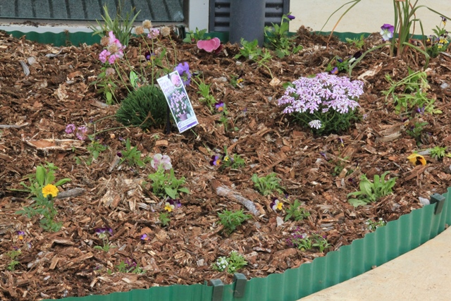 Newly-planted-flower-bed
