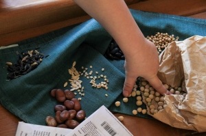 Seeding Dereel
