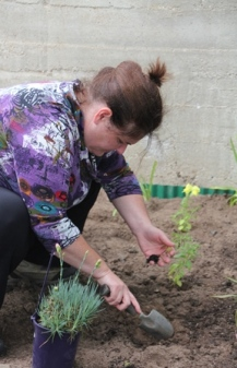 Planting-Seedlings-Flower-Garden