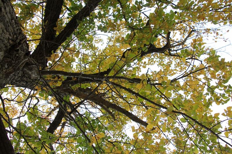 Autumn-leaves-dereel-camera-crew