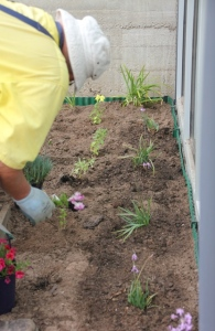 planting-the-flower-garden-at-the-Dereel-Hall